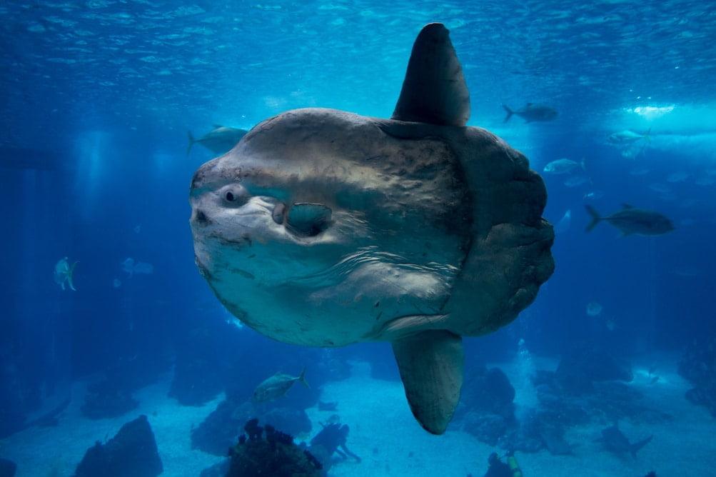 photo prise sous la mer