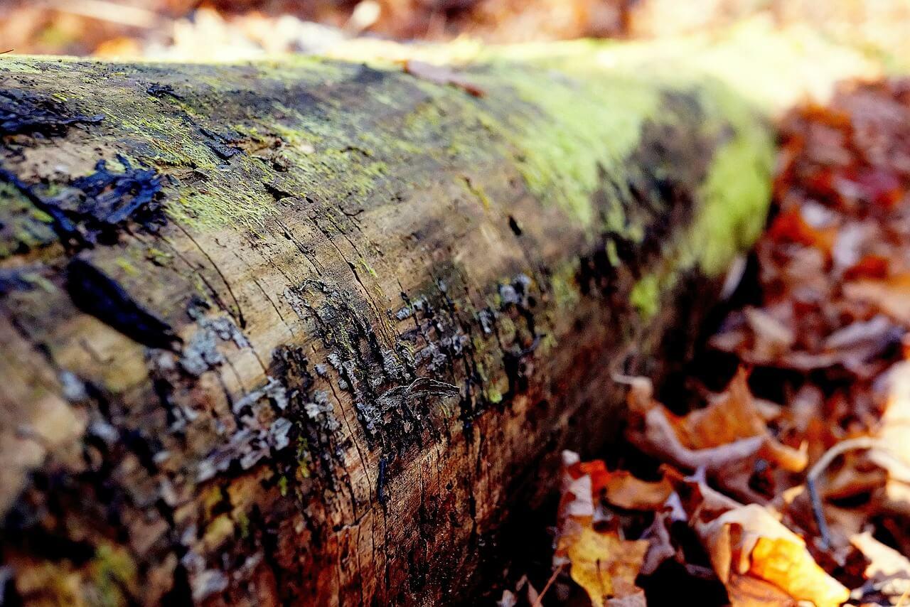 arbre mort dans un bois