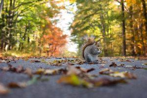 animaux d'automne