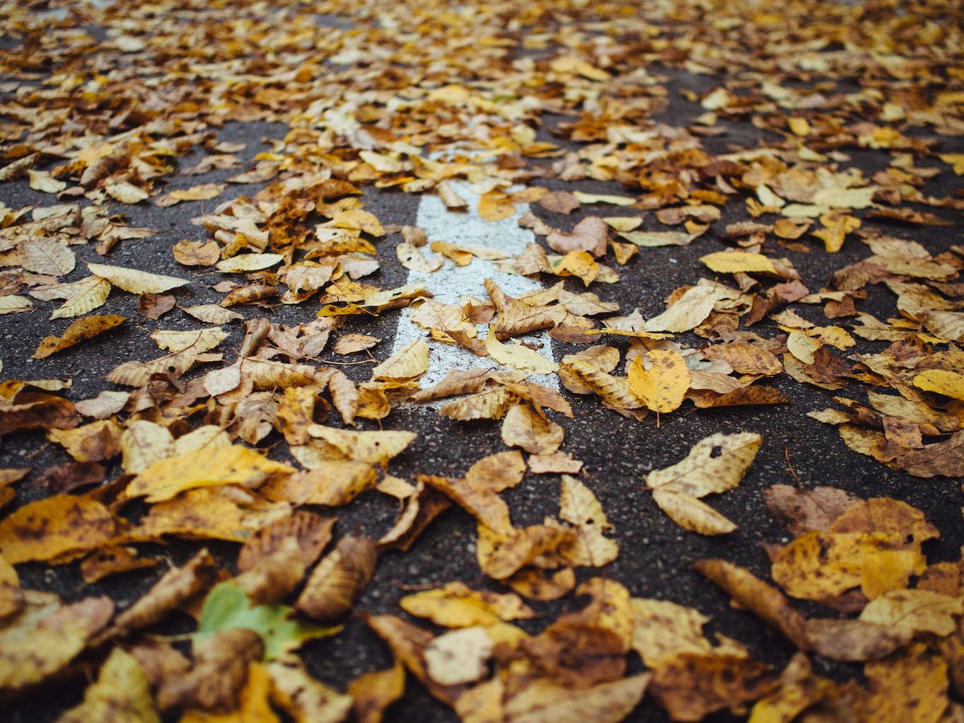 feuilles mortes sur le goudron